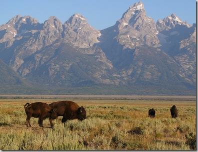 gt buffalo