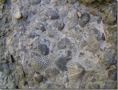 cu fossils