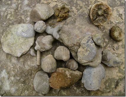 cu my fossils