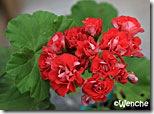 Red-Rambler
