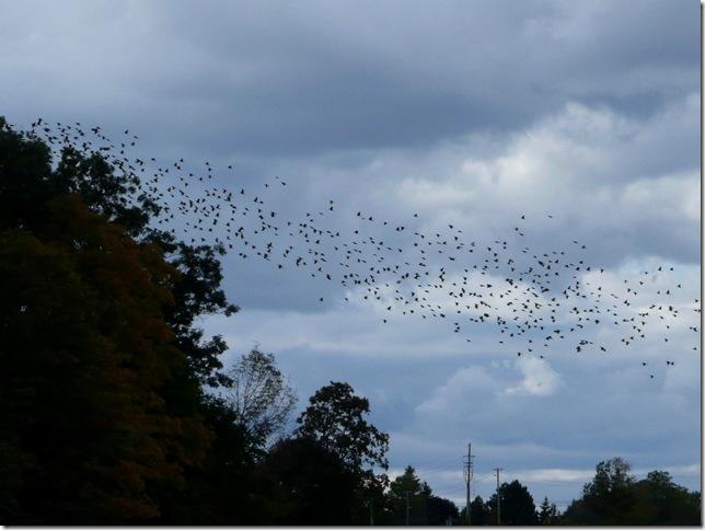 kerncliff birds