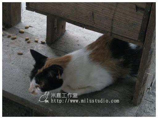 20100621-cats-49.jpg