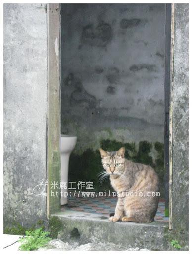 20100621-cats-41.jpg