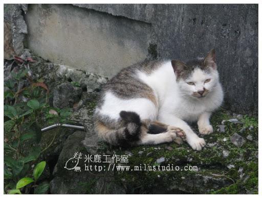 20100621-cats-36.jpg