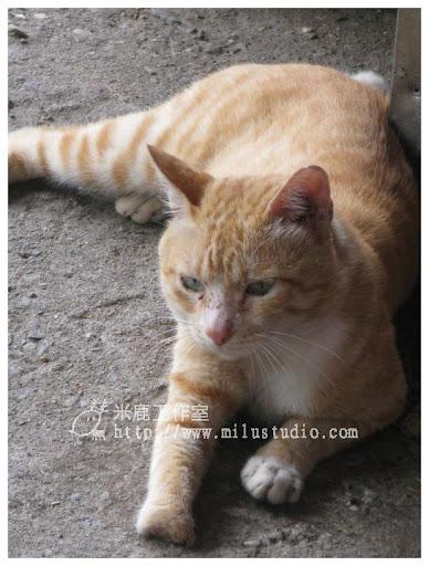 2010-cat01-03.jpg