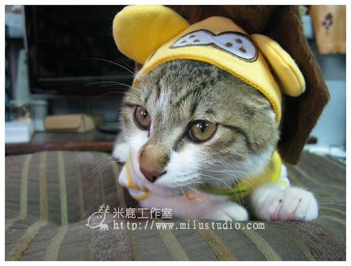 20110313cat07.jpg