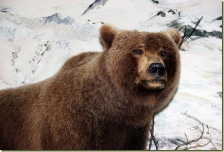 Skagway excursion into the Yukon (31) copy