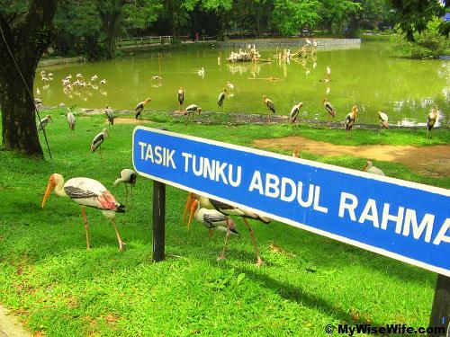 Storks by  lake side