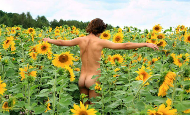 sunflowers_and_buns.jpg