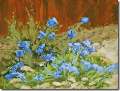 plumbago  bush, oil plein aire resized