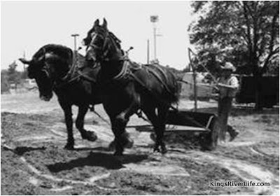 dirt scraping with two horses