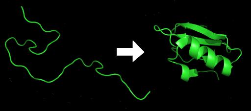 Plegamiento proteínico