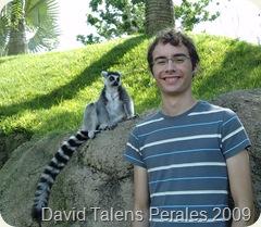 David y lemur