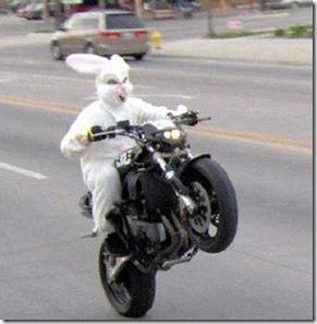 coelho motoqueiro