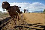纽约时报:扔掉跑步机,养只狗吧