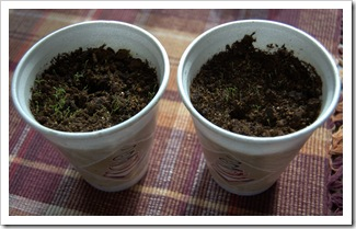 Styrofoam Coffee Cups for Seed Planting 1-2010-2