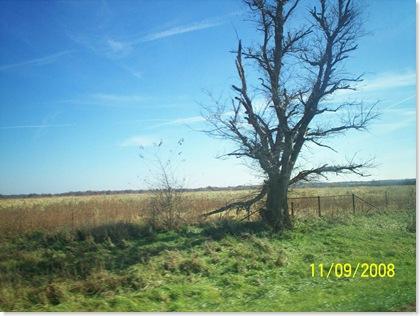 SE Kansas dead tree