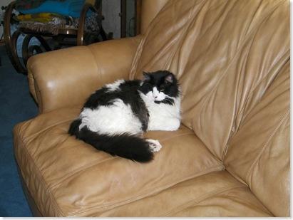 Primus, Debbi's cat