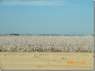 Arizona desert valley cotton
