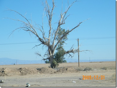 an almost dead tree on Selma Rd