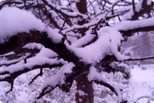 lilla lys på lilla sne