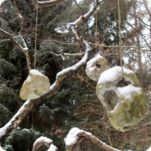 hulsten i træet