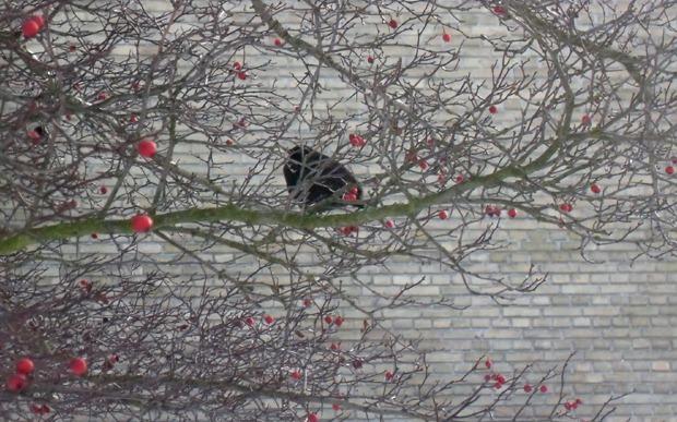 nytårsaftensdag 2010
