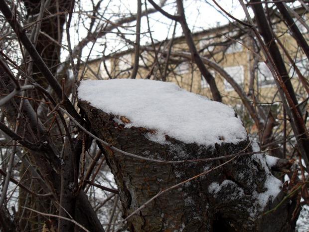 januar 2011