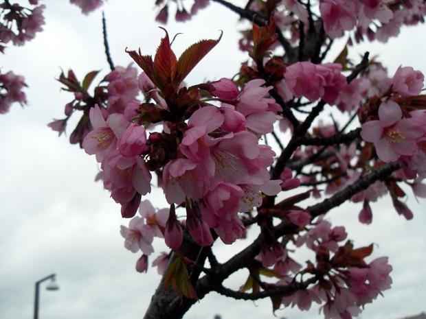 forårsblomster