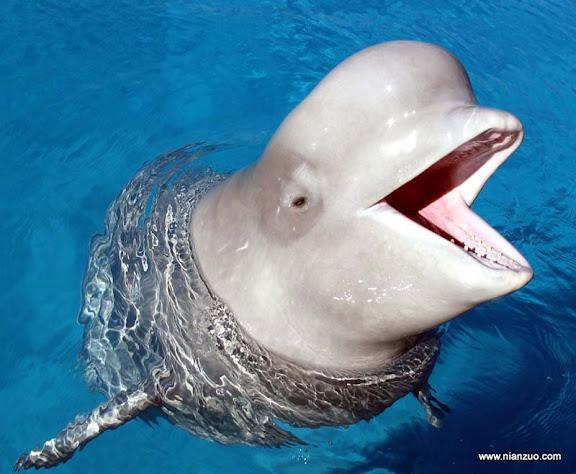 血盆大口 海豚嘴不小