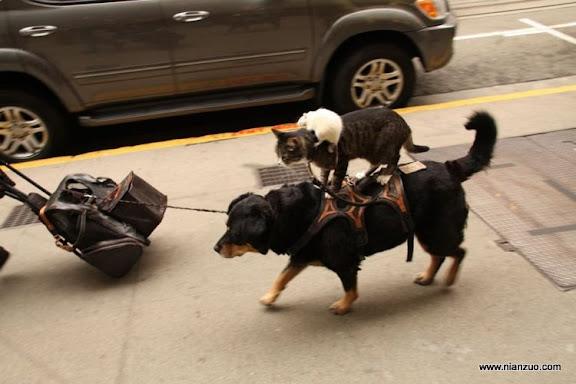 動物的快樂生活 這個一定發生在我們我們的和諧盛世!,狗,貓,老鼠