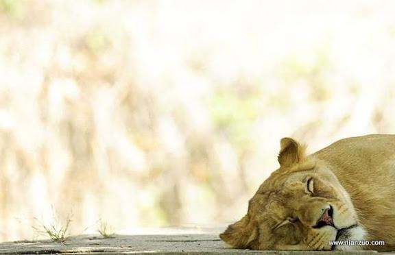 可爱的动物 睡。