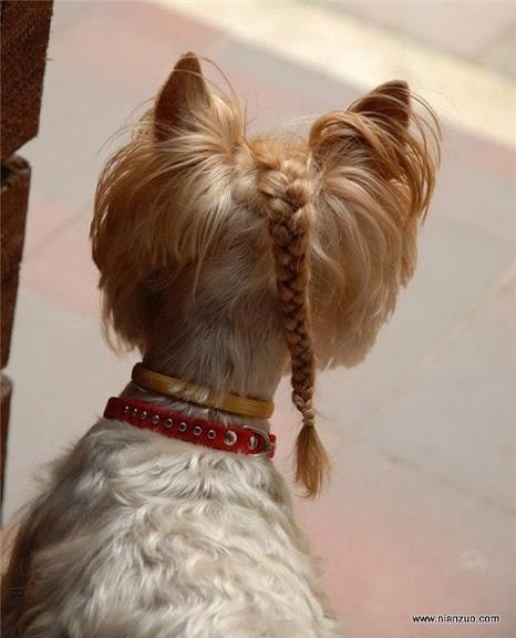 可爱的动物 季莫申科是偶像!