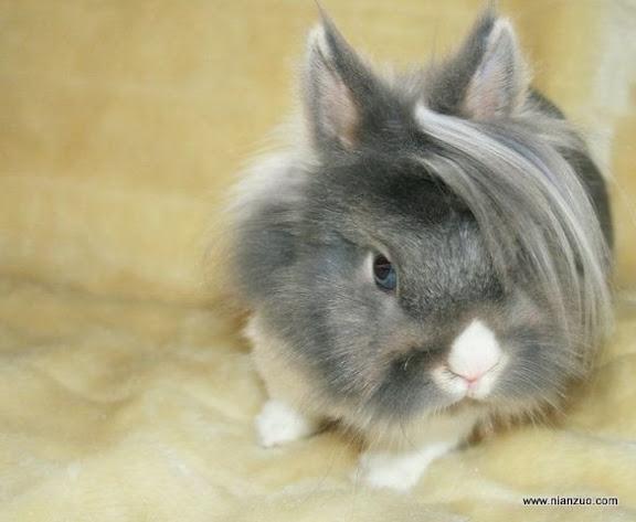 可爱的动物 小帅兔?