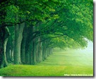 green-nature-wallpaper