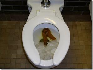 poop-large