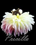 pricilla-signature