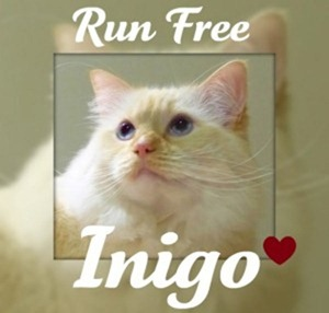 run free inigo