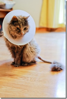 LOLcat-0856