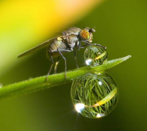 http://lh5.ggpht.com/_PQcPYfGhKuY/TNgMYYJHKlI/AAAAAAAAAr8/6P6TMW5eUOs/environmental-photographer-year-2010-fly-waterdrop_26723_600x450.jpg