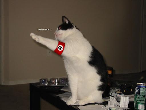 http://lh5.ggpht.com/_PSKTDgBayJ0/S8jWyOLAC7I/AAAAAAAAACw/6EnoDrGEn44/nazi%20cat1.jpg
