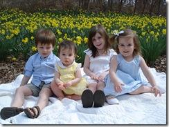 Daffodil_0020