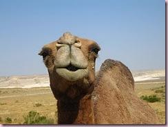 camel_toe_40