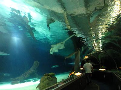 Exploring the Underwater Adventures Aquarium at the Mall ...