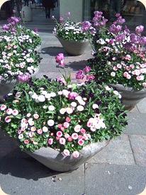Blomsterkummer i Århus