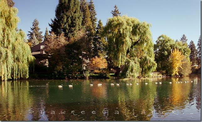 Drake Park.geese