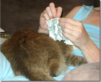 tabitha sewing