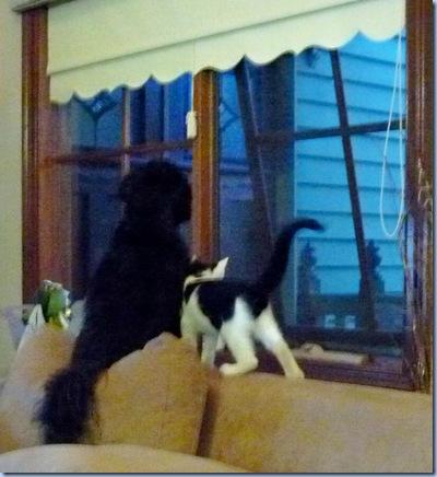 molly&kitty