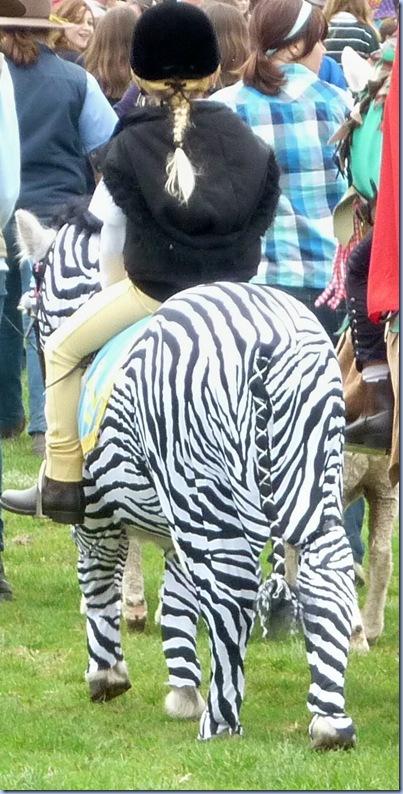 zebra pony