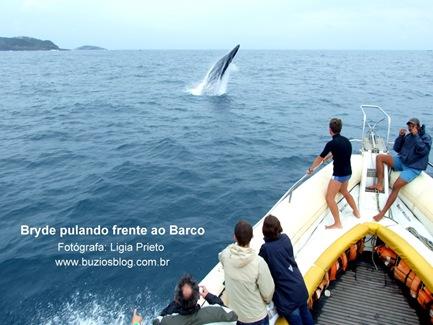 Foto 3 Bryde pulando frenteao Barco